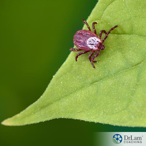 Your Guide to Natural Lyme Disease Cures – Part 1