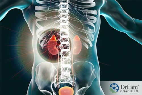 Adrenals highlighted in a body with NEM Nutrition™ Program