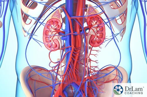 arteries and veins along with the adrenals with NEM therapy