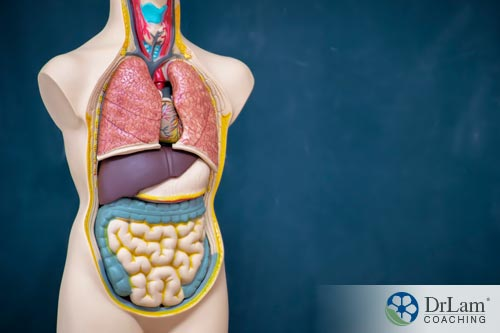 Body with organs showing chronic constipation