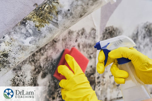 An image of someone removing mold from a surface wearing rubber gloves