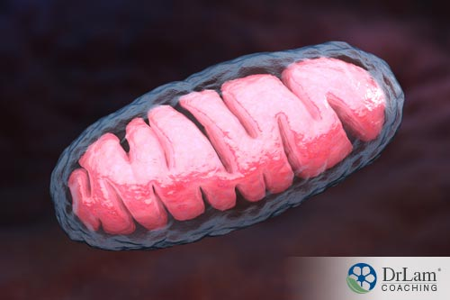 Improve gut microbiome and generate mitochondria