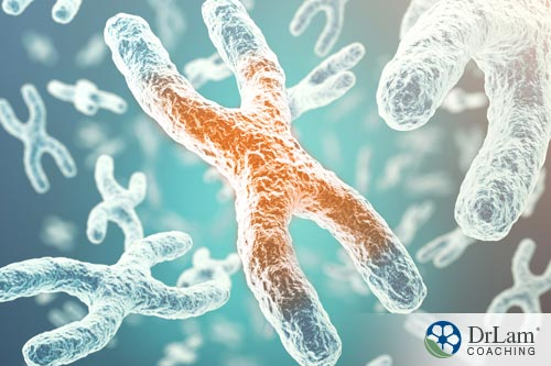 Stem cells and telomeres