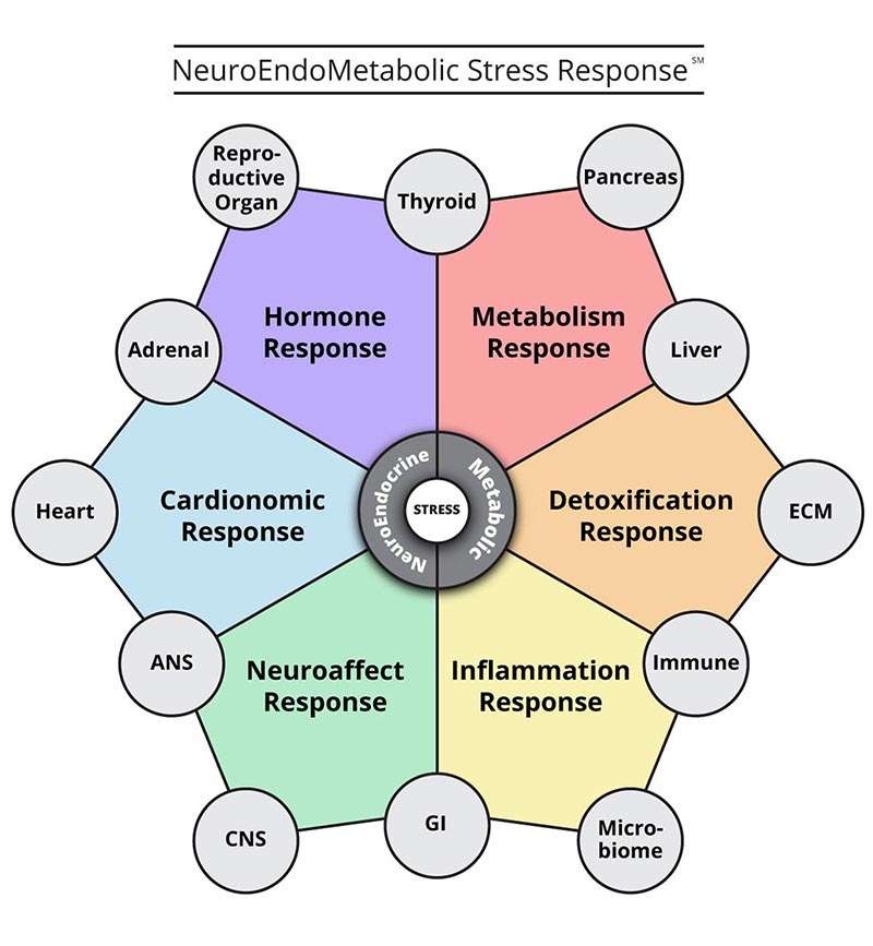 Hypothalamus hormones are part of the hormonal circuit of the NEM stress response