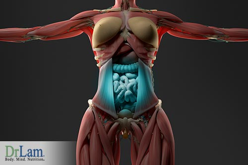 The bodies metabolic system and menopausal metabolic syndrome