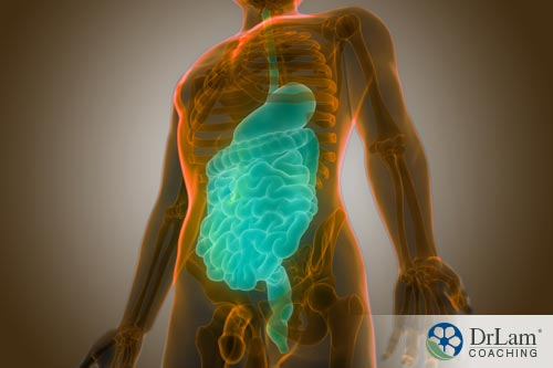 Leaky gut and occludin