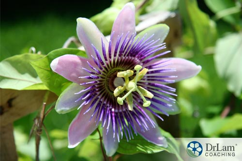 Calming herbs: Passionflower