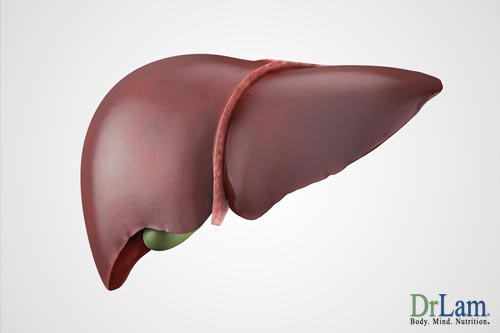 A liver render, illustrating the organ helped by liver cleansing herbs