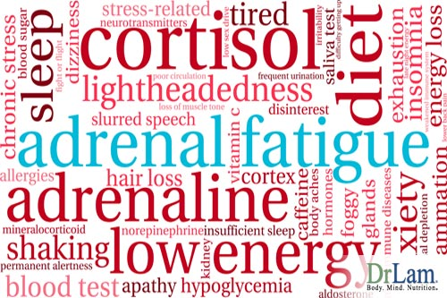Cortisol and the facts about adrenal fatigue