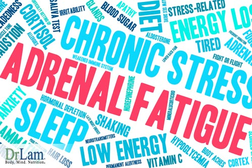 Whether or not there is healthy gut bacteria affects the level of stress on the body, a huge factor in the development and severity of adrenal fatigue.