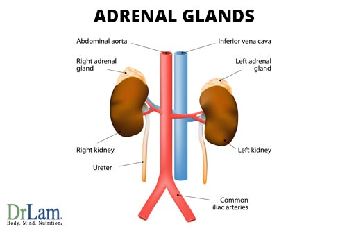Adrenal Fatigue Syndrome Your Body Knows Something That You Do Not