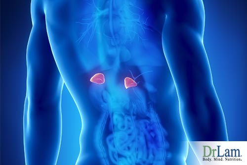 The adrenals may be involved in chronic fatigue syndrome, how to treat Adrenal Fatigue may be key in treatment for Chronic Fatigue