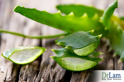 Using Aloe Vera to create a mosquito remedy