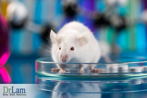 Studies on mice have demonstrated the power of a Longevity Diet to slow aging