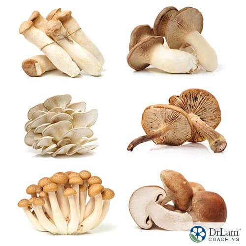 Six different kinds of mushrooms