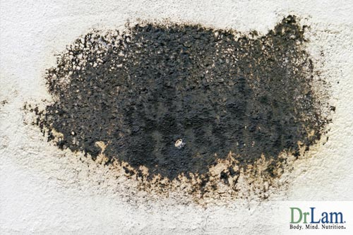 Exposure to mold can cause mold toxicity symptoms