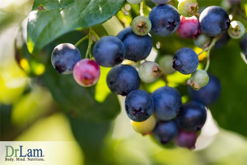 Blueberries contain obesity and fatigue fighting pterostilbene