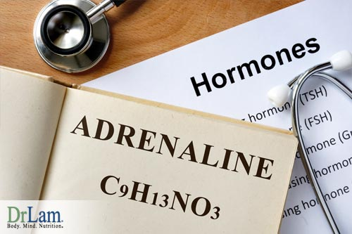 Adrenal Fatigue forces the body into maintenance mode where it struggles to maintain balance