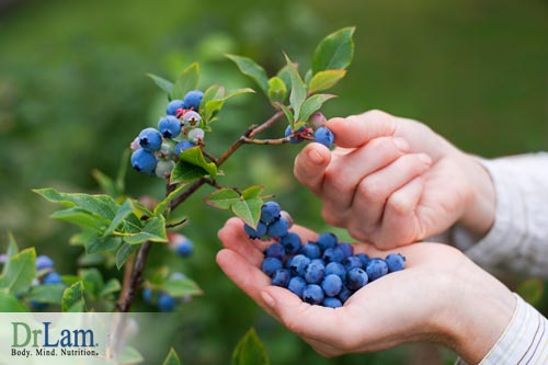 Blueberry benefits can reverse damages to the body