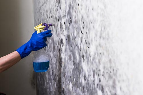 Techniques for natural mold removal