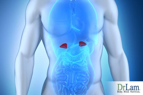 Heavy metals in the body can worsen adrenal gland dysfunction and steps should be taken to help the body rid itself of these dangerous elements