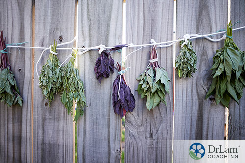An image of different types of basil tied to a string along a wood fence to dry