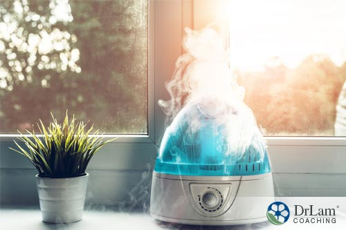 An image of a humidifier next to a house plant