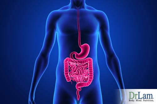 Systemic enzyme therapy and the digestive track
