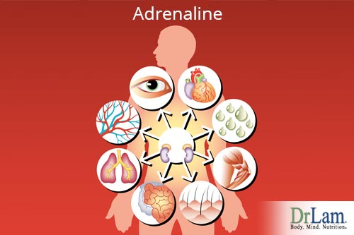 Help determine your adrenal fatigue with this adrenal stress test