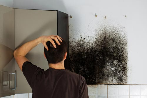 Natural mold removal to help reduce the exposure of mold