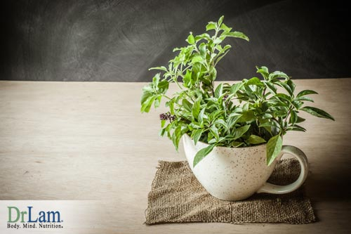 Holy basil cortisol benefits are good for the body