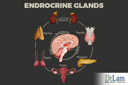 Glands and endocrine hormones