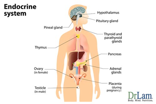 Having an understanding of the endocrine system and hormone imbalance symptoms is important when dealing with adrenal fatigue.