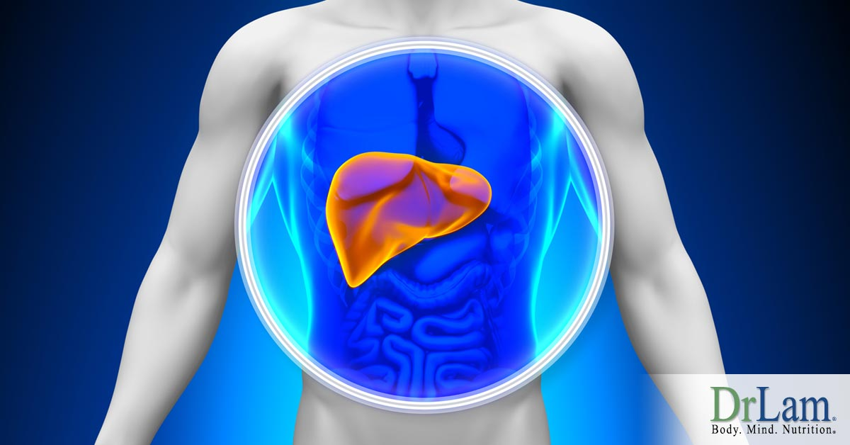 Liver Health Powerful Advice For Those With Adrenal Fatigue Syndrome