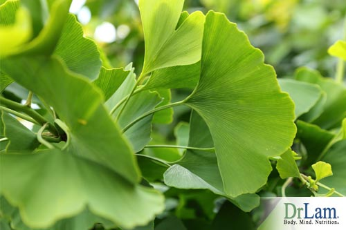 Gingko is a natural alternative for aspirin and conventional atherosclerosis treatment