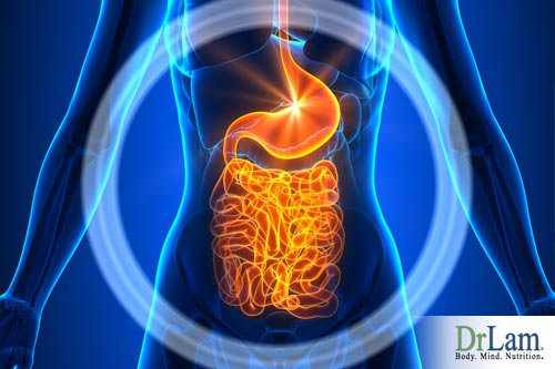 anti-inflammatory diet for gut balancing