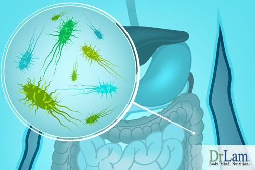 Gastrointestinal disorders can be avoided by maintaining healthy gut flora.