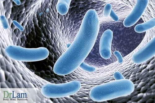The relationship between the microorganisms in your body, and especially in your gut, is important to health and controlling chronic inflammation