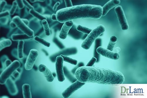 healthy stomach bacteria and microbiome