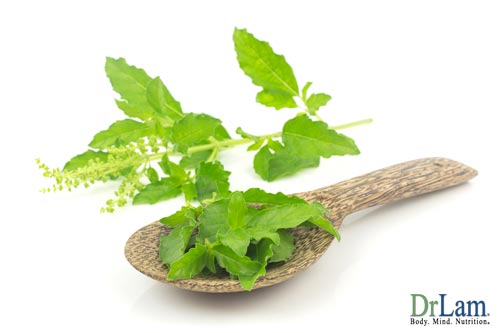 Holy basil cortisol benefits start with a simple plant.