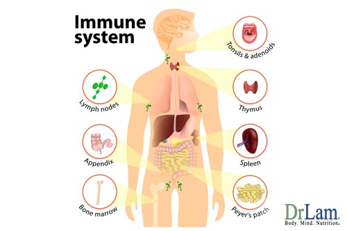 A healthy immune system is obtainable, try olive leaf and cancer fighting foods