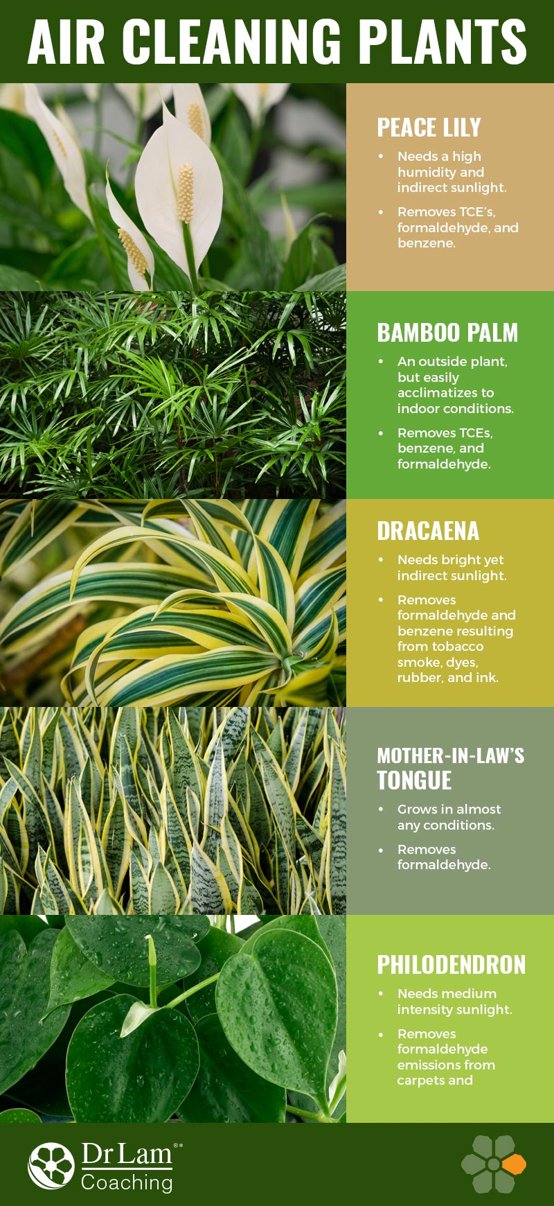 Check out this easy to understand infographic about air cleaning plants