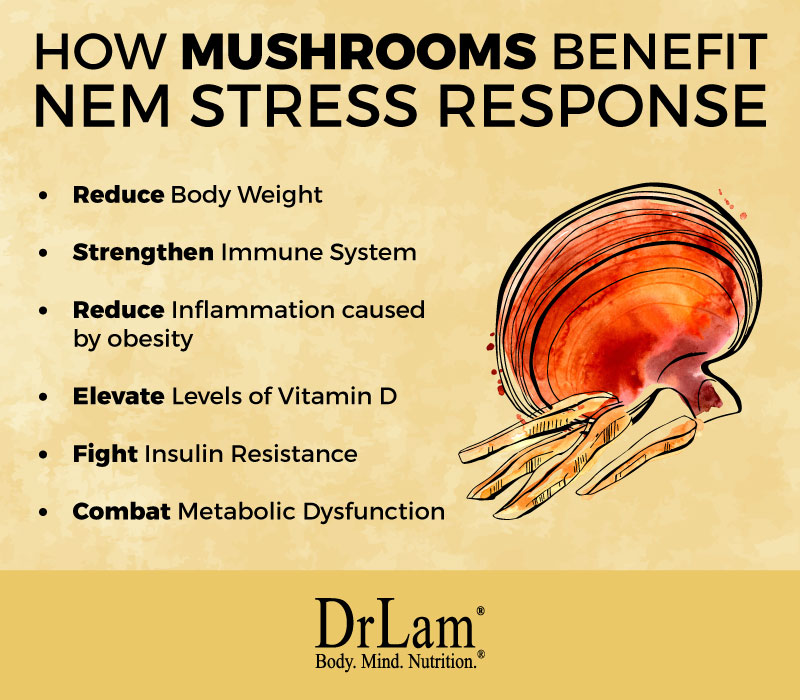 Check out this easy to understand infographic about mushroom nutritional benefits for NEM stress response