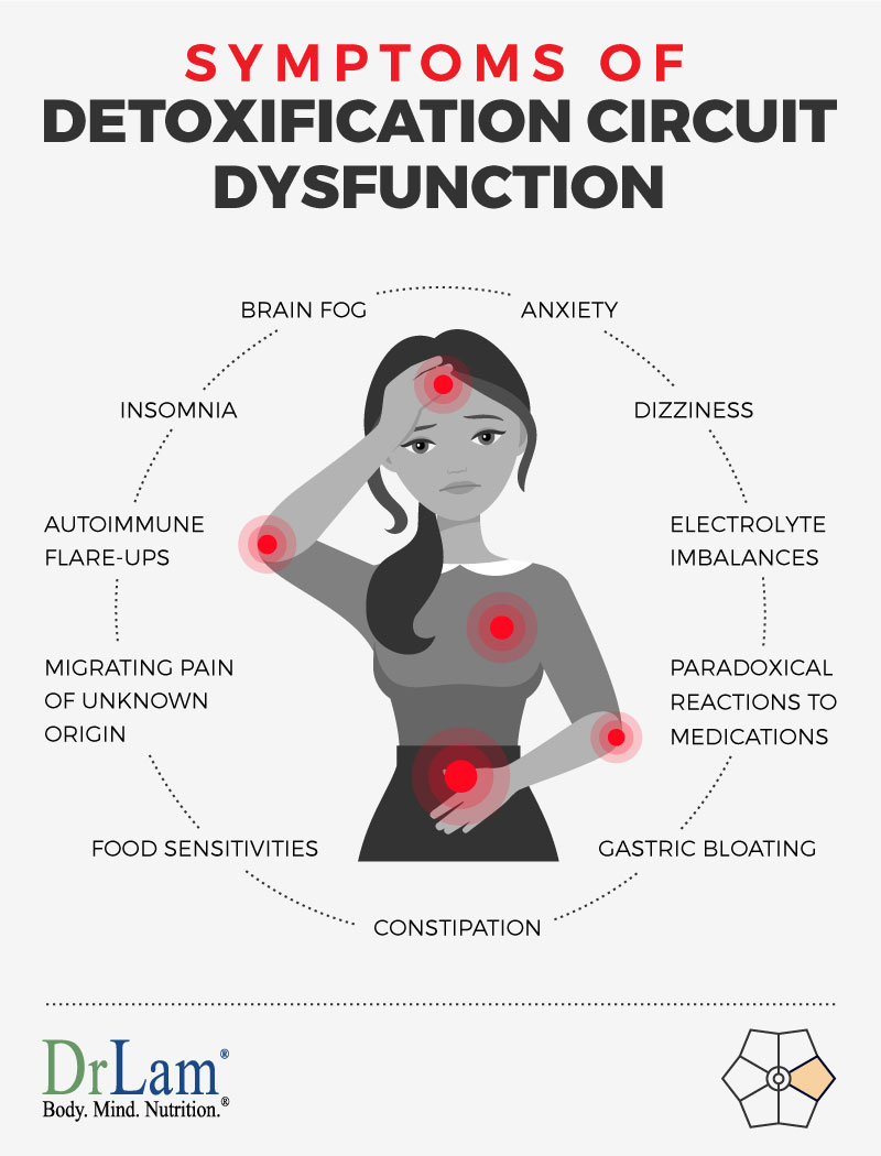 Check out this easy to understand infographic about the symptoms of Detoxification Circuit Dysfunction