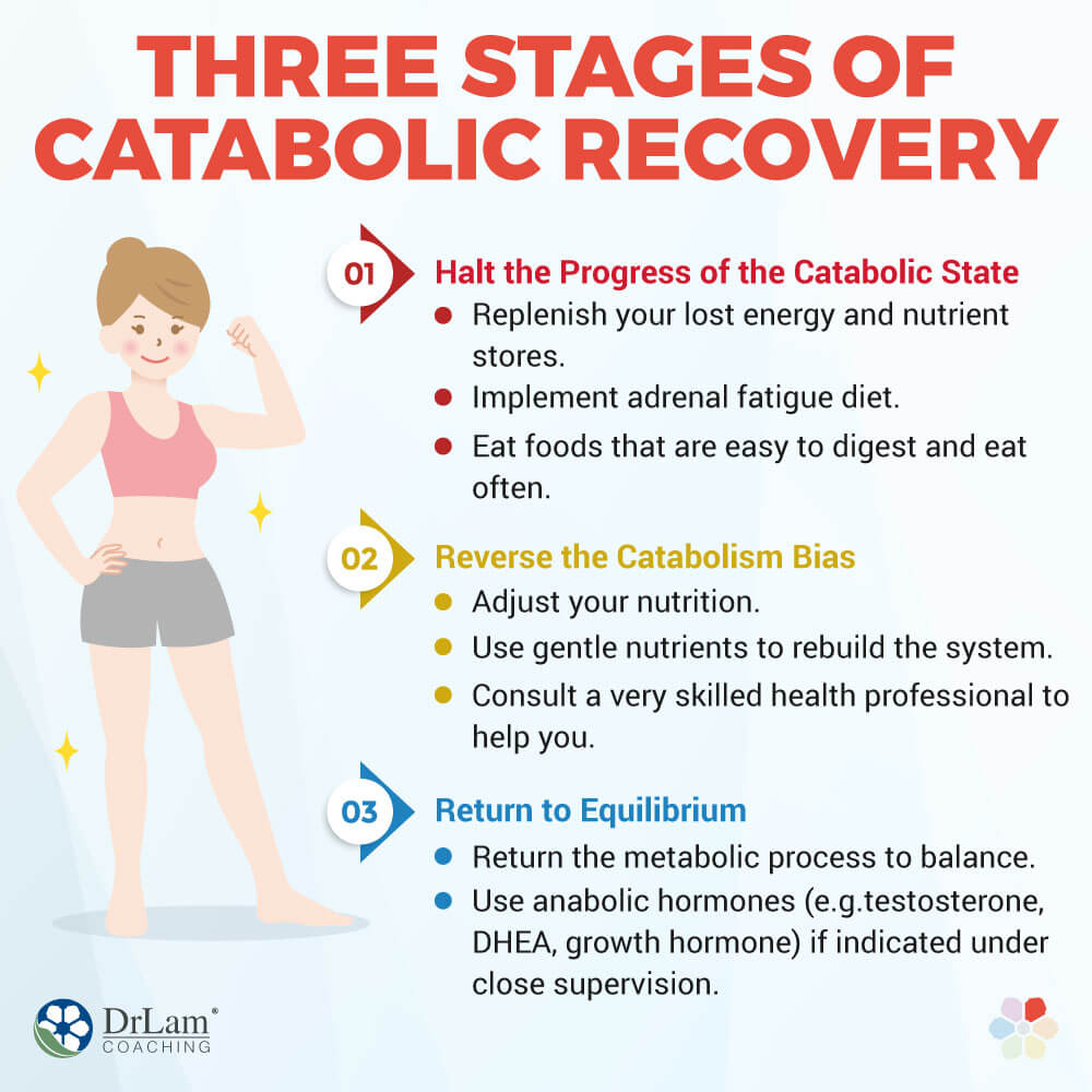 Three Stages of Catabolic Recovery