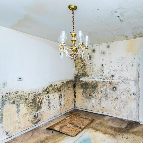 For optimal health use a natural mold removal