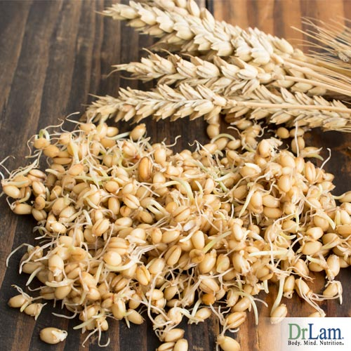 Sprouted wheat is healthier for your body