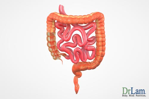 Metabolic syndrome can affect your gut