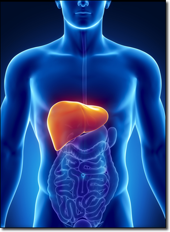 Your liver performs many detoxification processes important for adrenal fatigue/