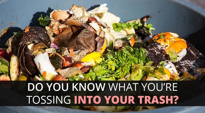 Food Waste, Waste Not Want Not